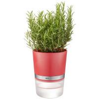 Lonček za zelišča s samonamakalnim sistemom Botanico, rdeč