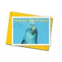 Čestitka v kuverti, Dolphin Birthday